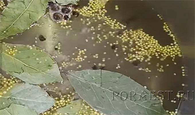 marinad-dlja-ogurcov