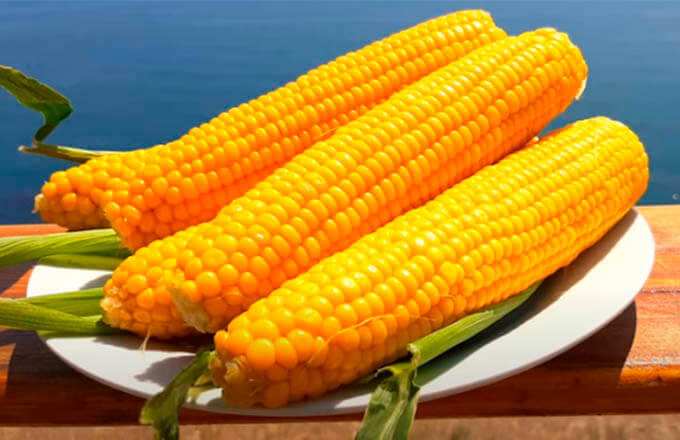 kak-svarit-kukuruzu-v-pochatkah-s-solju