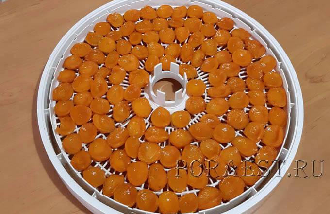 abrikosy-na-poddone-ot-sushilki